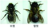 야생벌(뿔가위벌류)로 농약 급성독성 시험한다
