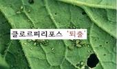 원예용 '클로르피리포스' 살충제 등록취소